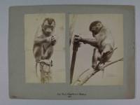 Signatur 301_MII 1,3F Credit: Ottomar Anschütz (1846-1907)