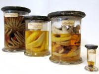 Verschiedene Stachelhäuter-Arten aus der Nordsee des 19. Jahrhunderts, die heute zur historischen Sammlung des Niedersächsischen Landesmuseum für Natur und Mensch Oldenburg gehören.