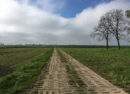 Landschaft im Südlichen Oderbruch, (ehemalige DDR), 2017, Foto: Vittoria Capresi