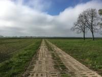 Landschaft im Südlichen Oderbruch, (ehemalige DDR), 2017, Foto: Vittoria Cafresi