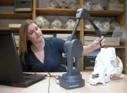 Dr. Ashleigh Haruda erforscht in der Sammlung der Martin-Luther-Universität Halle-Wittenberg mit Hilfe eines sogenannten Microscribes Skelettteile von Hausschweinen. Foto: Frank Steinheimer