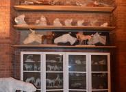 Anatomische Sammlung, Tiermodelle, Credit: HfbK Dresden, Kustodie, Foto Jakob Fuchs