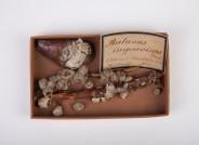 Neozoische Seepocken aus der östlichen Ostsee, die 1866 gesammelt wurden. Sie dokumentieren in der Sammlung des Zoologischen Museum Kiel die historische Verbreitung dieser eingeschleppten Art im 19. Jahrhundert. Foto: Axel Petersen-Schmidt