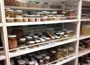 Ein Blick in die Sammlungen mariner wirbelloser Tiere des Forschungsinstituts Senckenberg in Frankfurt am Main. Die hier deponierten Organismen wurden seit den 1970er Jahren von zahlreichen Stationen in der gesamten Nordsee gesammelt, um Veränderungen in der Zusammensetzung der Meeresfauna zu dokumentieren. Foto: Dr. Dieter Fiege