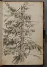 Naturstudie aus einem Skizzenbuch von Carl Morgenstern, Foto: Städel Museum