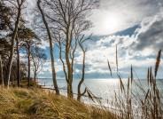 """Darßer Weststrand im Nationalpark """"Vorpommersche Boddenlandschaft"""" beim Ostseebad Ahrenshoop, Foto: Gerhard Westrich für VolkswagenStiftung"""